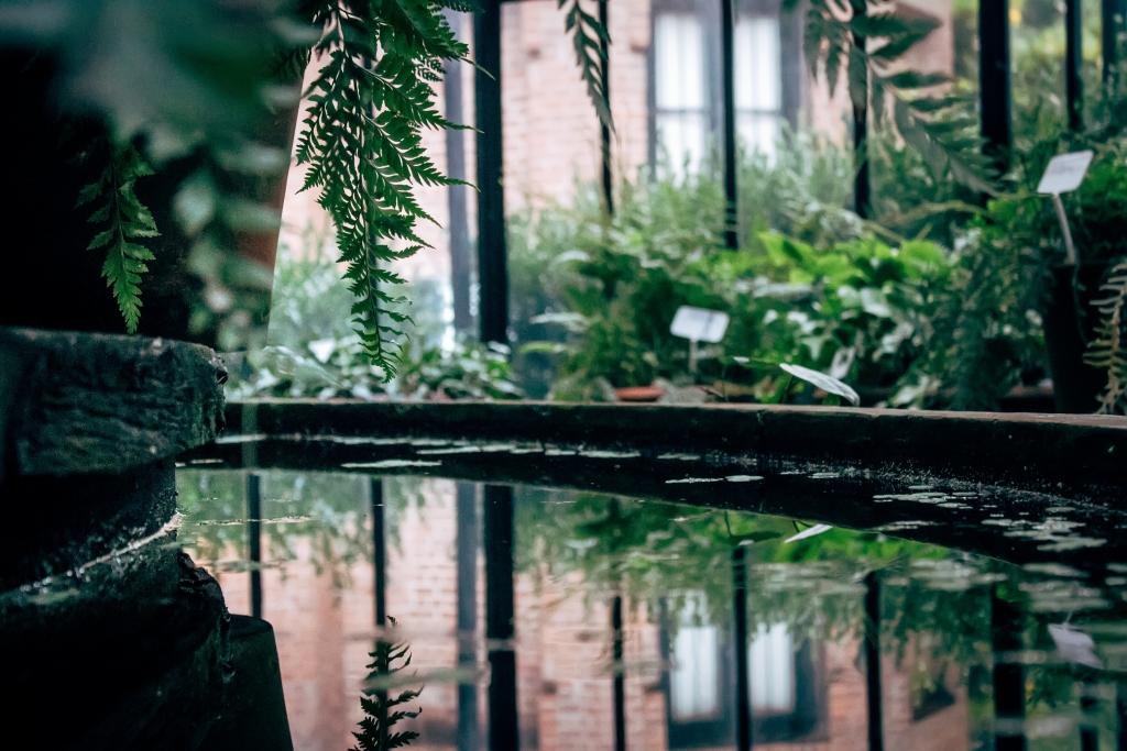 Jardin minimalista estanque